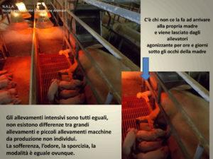 animali-allevamento-libertà